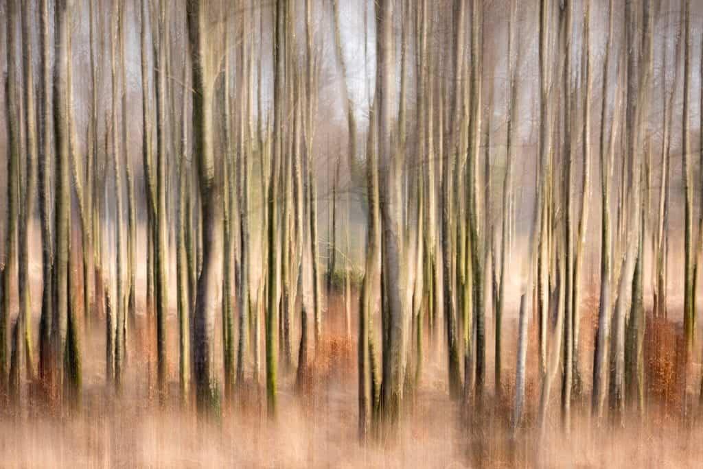 ICM in het bos