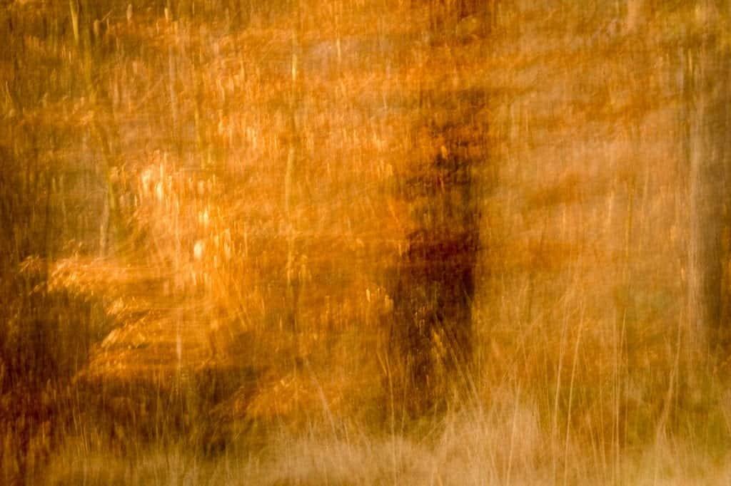 Foto met beweging gemaakt in het bos.