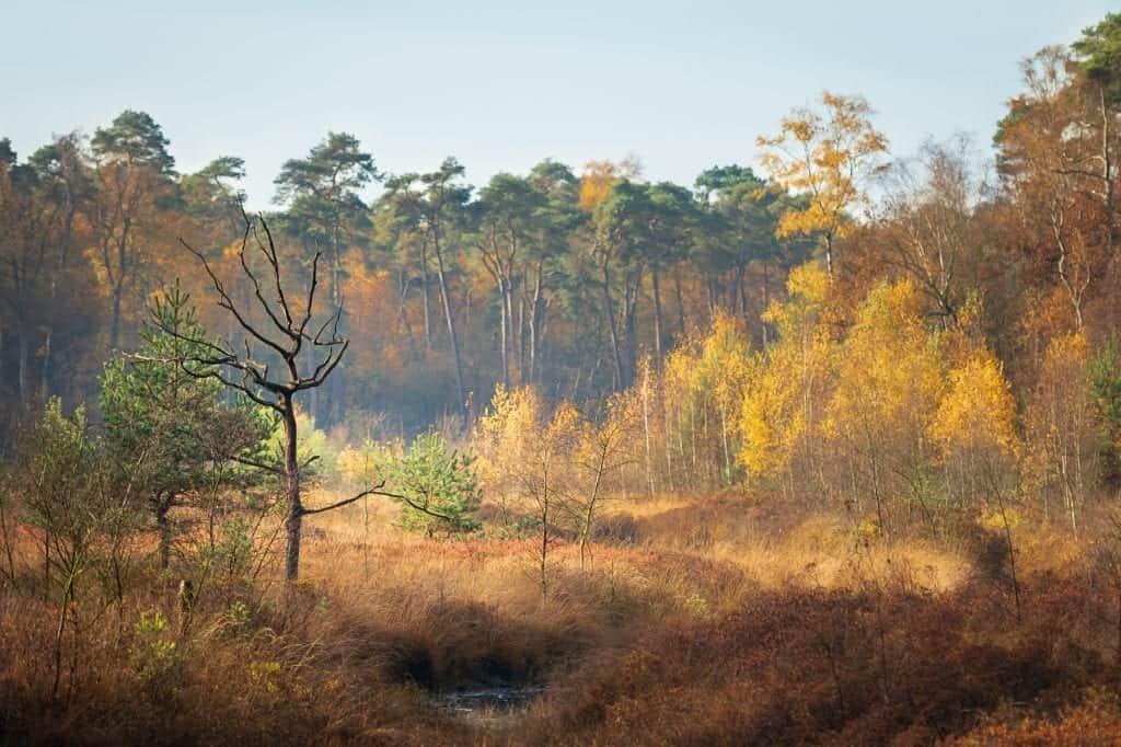 Een van de mooie plekjes in Oisterwijk voor herfstfotografie