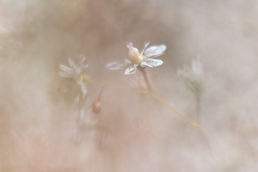 Een voorbeeld uit de workshop macrofotografie Soft Focus