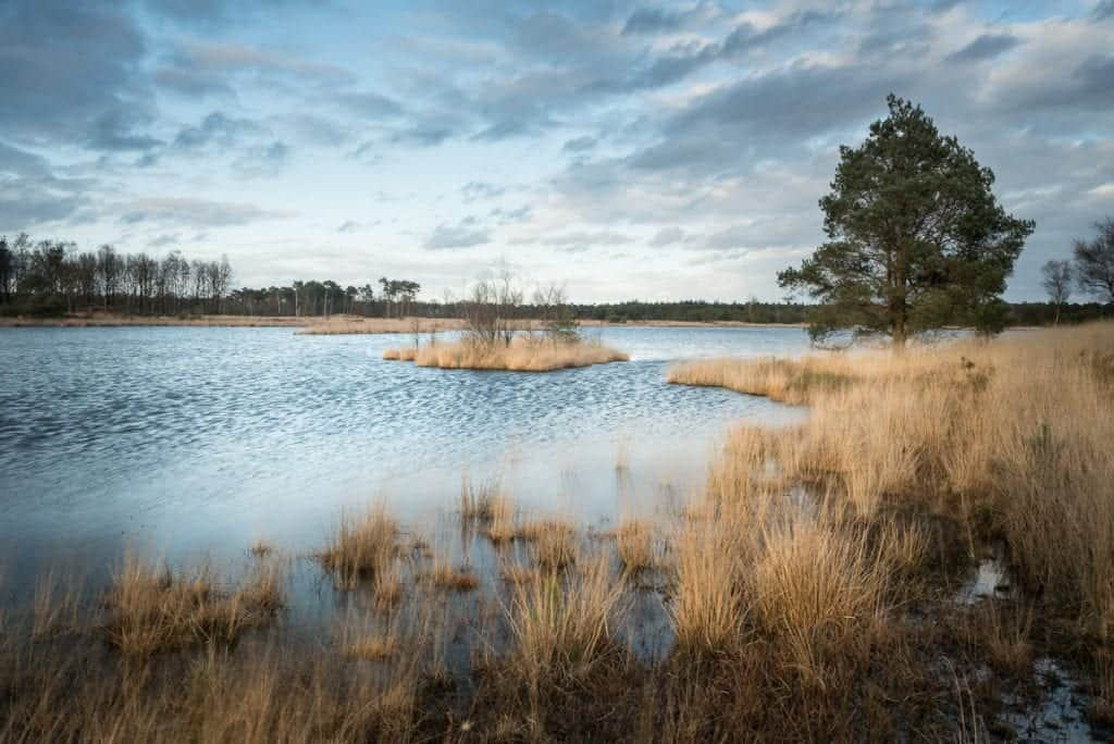 Starten met natuurfotografie aan de waterkant