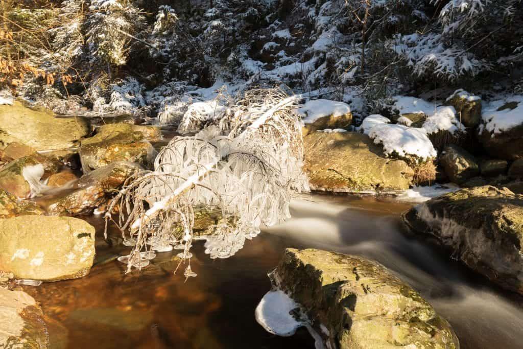 Wintertijd in de Belgische hoge venen vastgelegd op foto