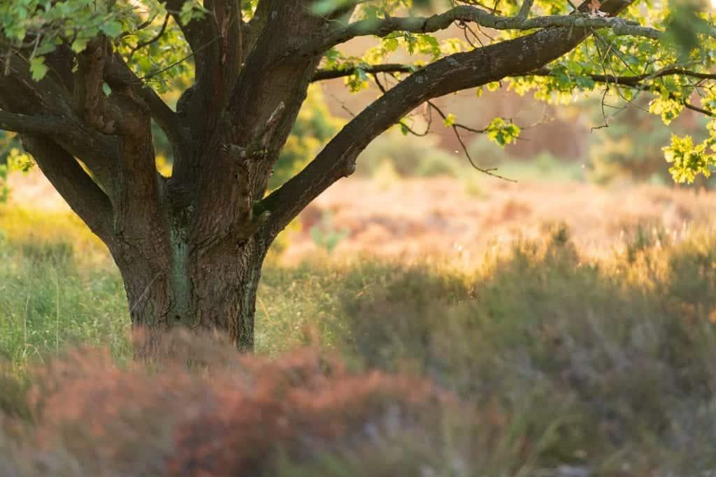 Een mooie plek gefotografeerd tijdens de workshop op de Kalmthoutse Heide