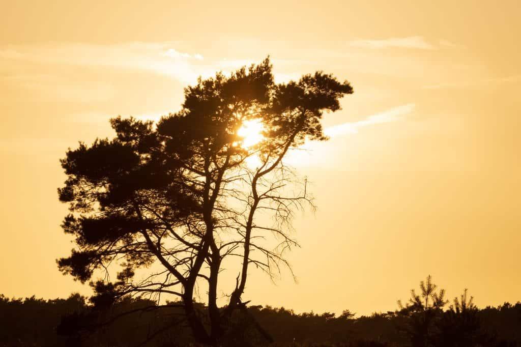 De zonsopkomst tijdens de workshop landschapsfotografie Kalmthoutse Heide Zomer