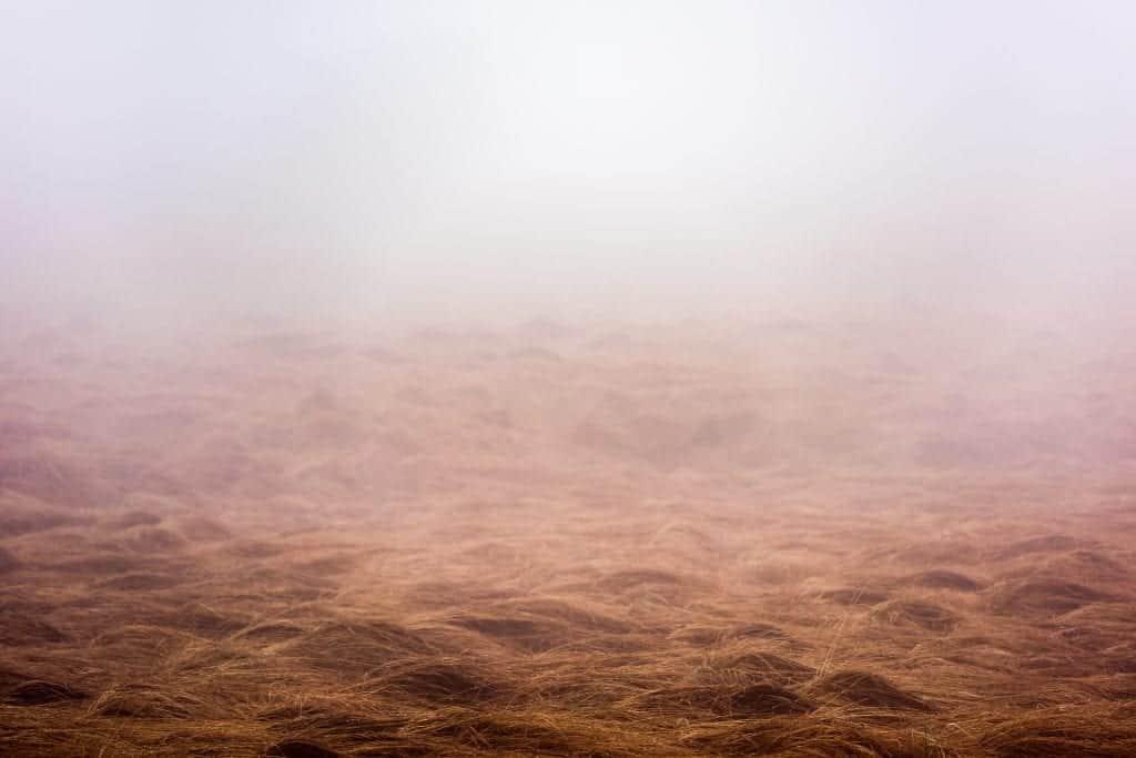 Mist in de Hoge Venen: mooi en speciaal