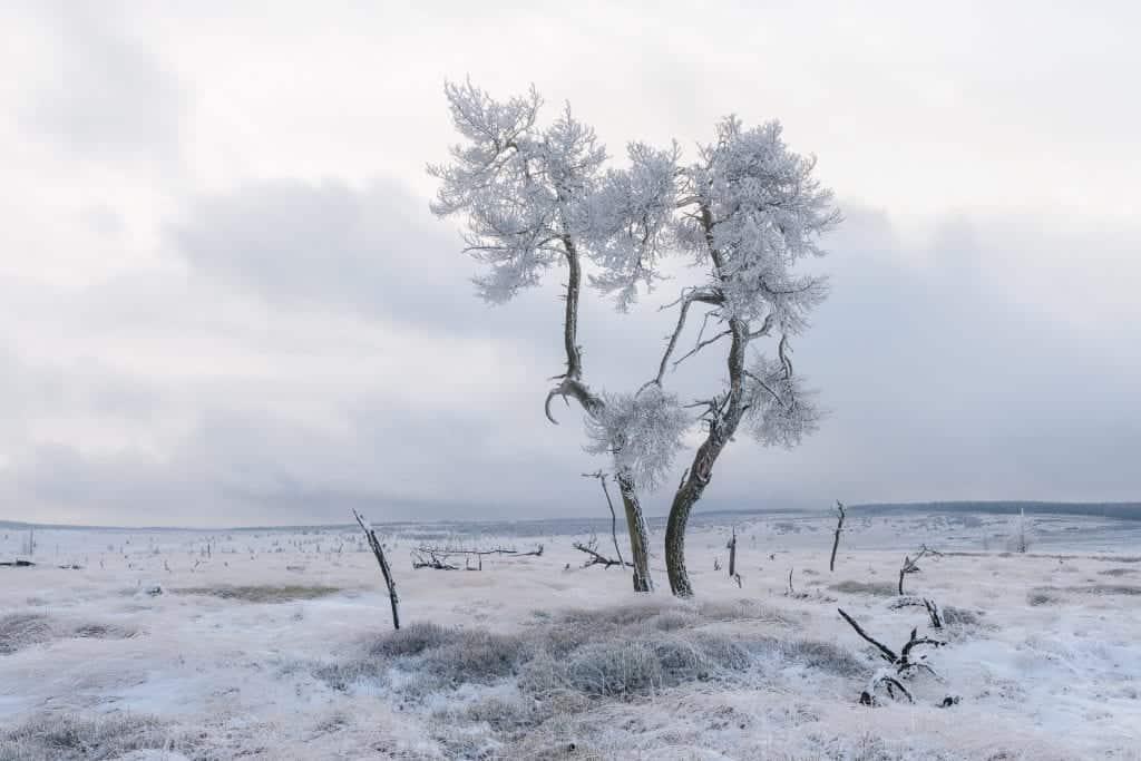 Noir Flohay in de winter