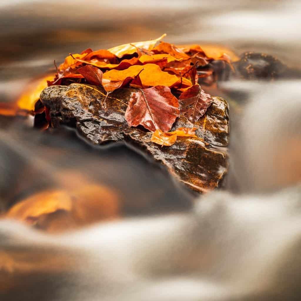 een detailopname van het meest fotogenieke riviertje in de Hoge Venen