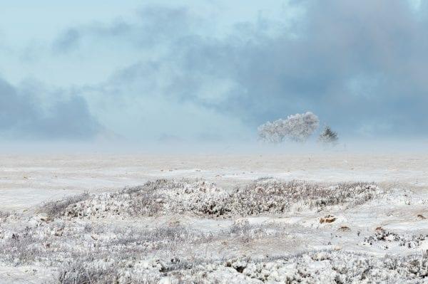 Mooie composities maken tijdens de workshop landschapsfotografie Hoge Venen in de winter