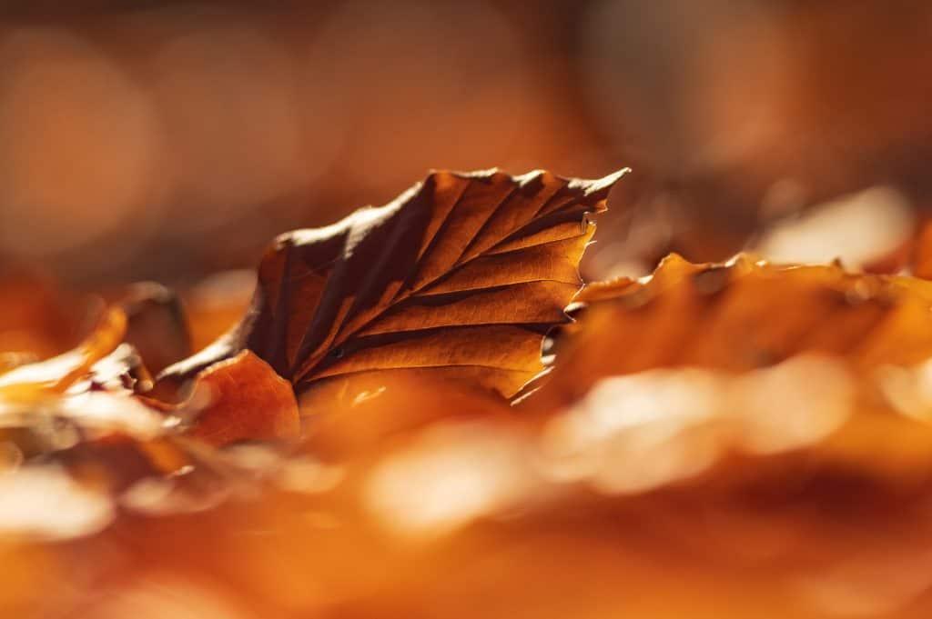 Een blad in een omgeving van mooie herfstkleuren