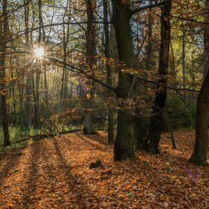 Typisch herfstfotografie, de zon die op de oranje bladeren schijnt