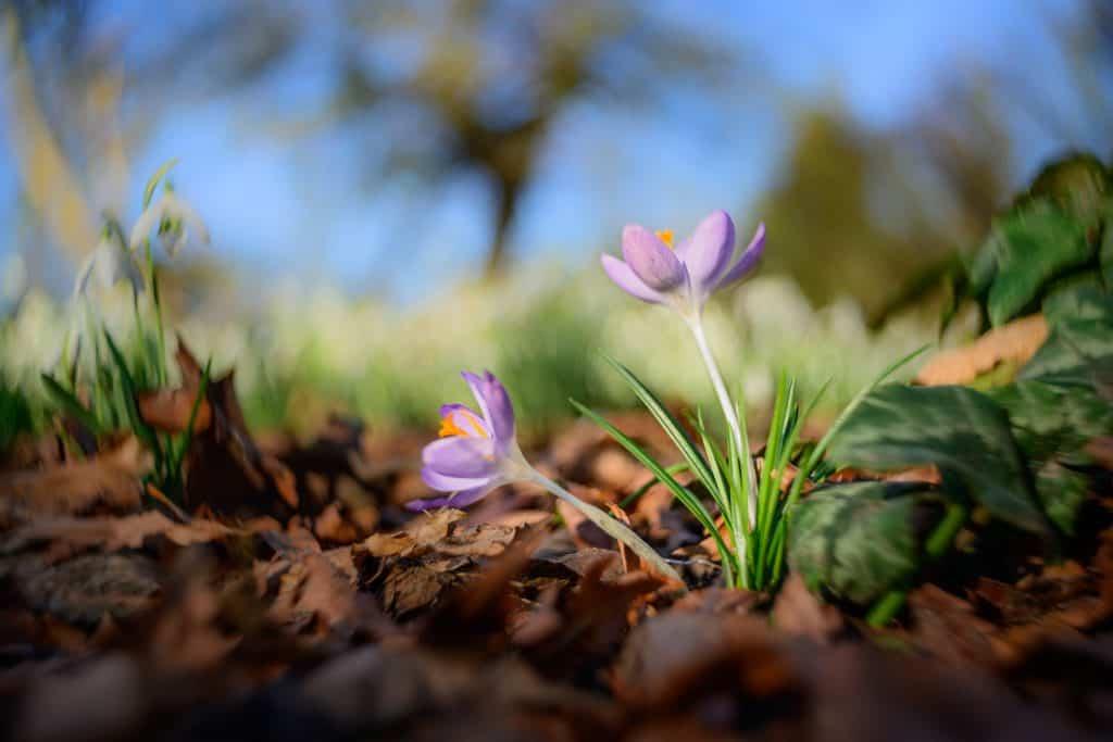 Creatieve foto's met Lensbaby: Burnside 35 in het vroege voorjaar