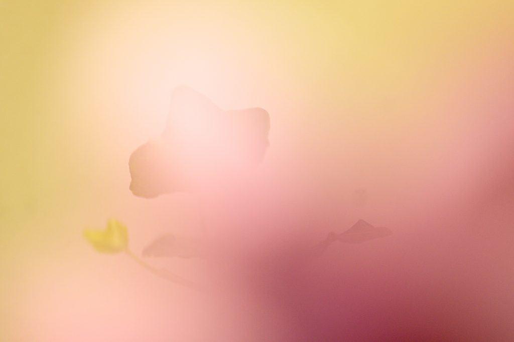 Abstracte macrofotografie is goed mogelijk met het close up filter van NiSI.