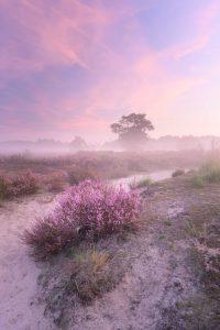 Tijdens een mistige ochtend op de Kalmthoutse Heide