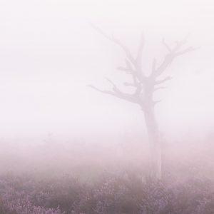 Pas je belichtingscompensatie aan als je mist fotografeert
