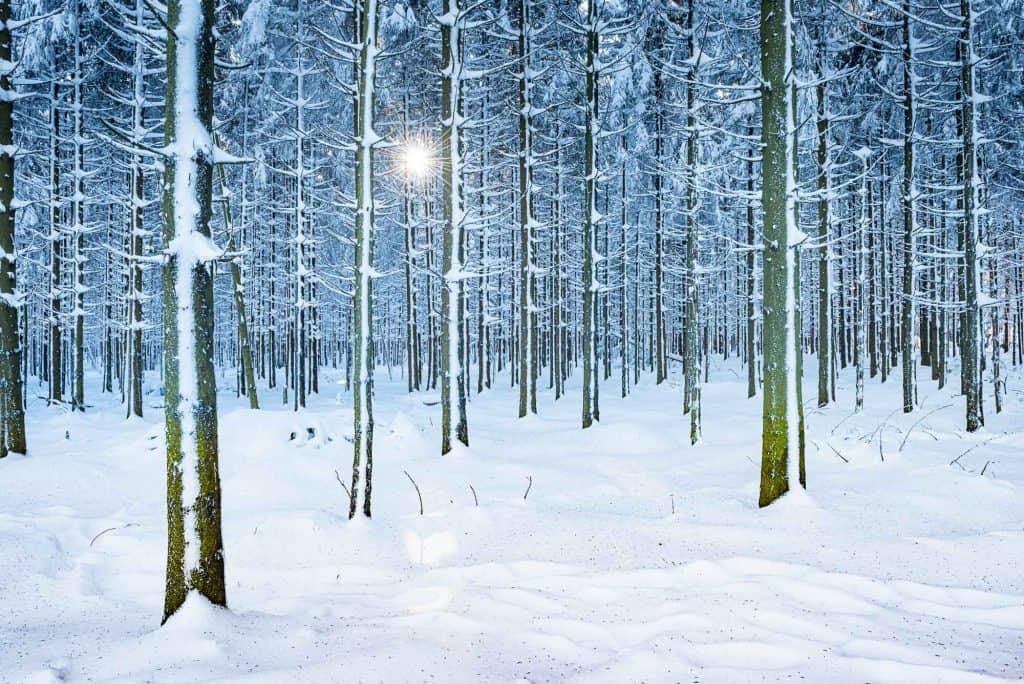 Mooie foto van een besneeuwt bos met blauwe tint