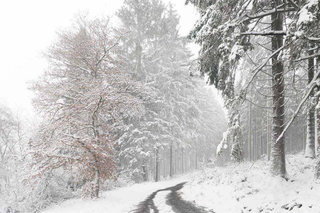 Een bospad in de winter en een pad waar net een auto is langsgereden