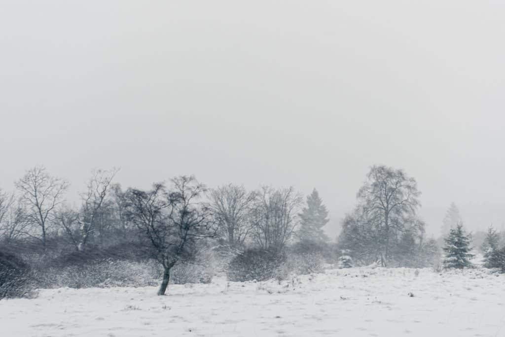 Natuurfotografie in de winter betekent soms een sneeuwstorm trotseren.