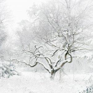 Een foto gemaakt tijdens de workshop landschapsfotografie Hoge Venen in de winter.