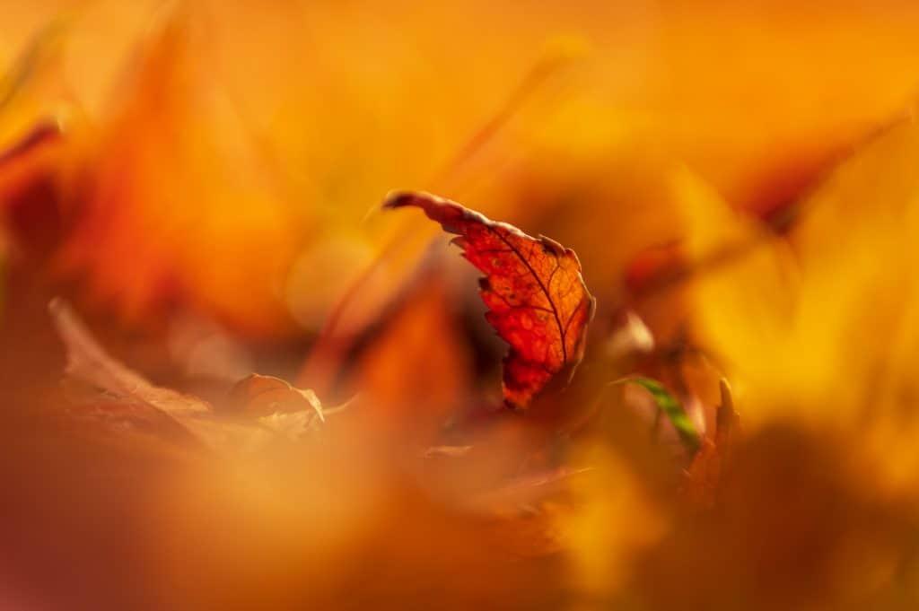 Ook in de macrofotografie kun je het Landscape CPL filter gebruiken