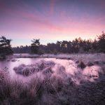 5 Tips voor creatieve natuurfotografie in de winter