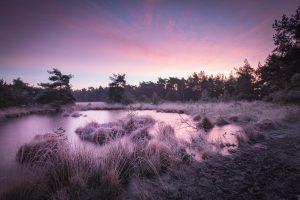 Super mooie foto van de winterse natuur met een paarse tint