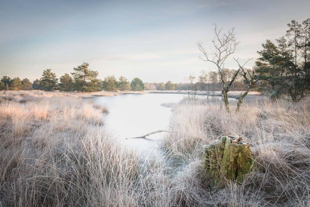 Mooie winterse ochtend foto met heide, een meertje en op de achtergrond een bos