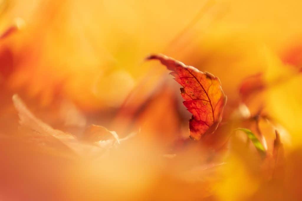 Een prachtige Macrofoto van een herfst blad