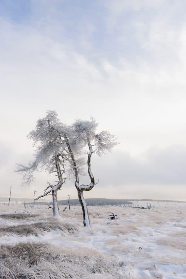 fotograferen met koud weer in de Hoge Venen